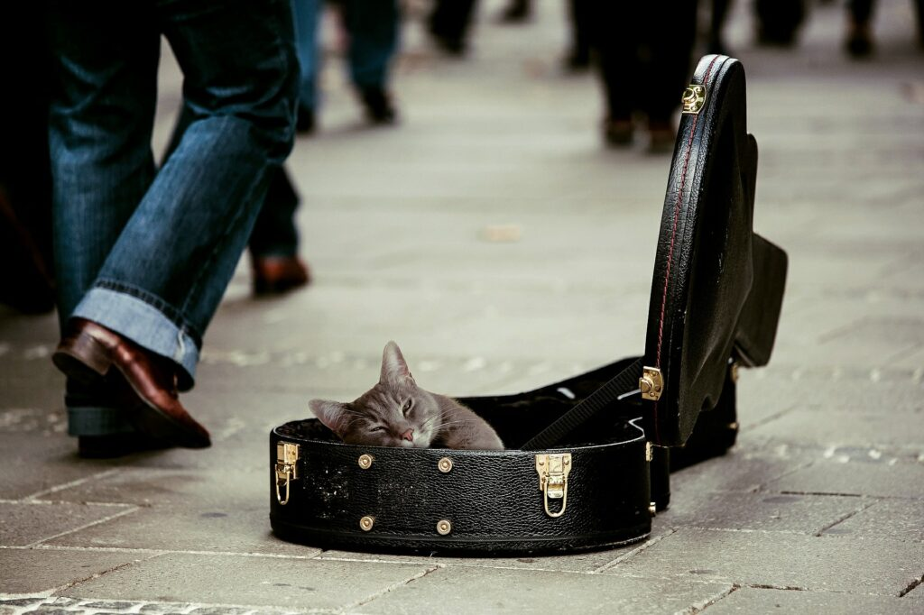 cat sleeping in guitar case in the middle of the street